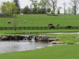 Winstar Farm Pond
