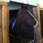 Treblemaker in Stall