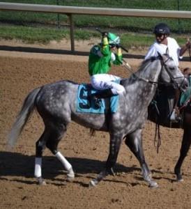Horse Dapples