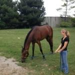 Jaime Stevens grazing horse