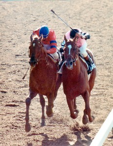 Affirmed vs Alydar