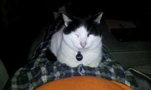 Bandit on My Lap
