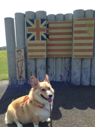 Augie at Saratoga Batttlefield
